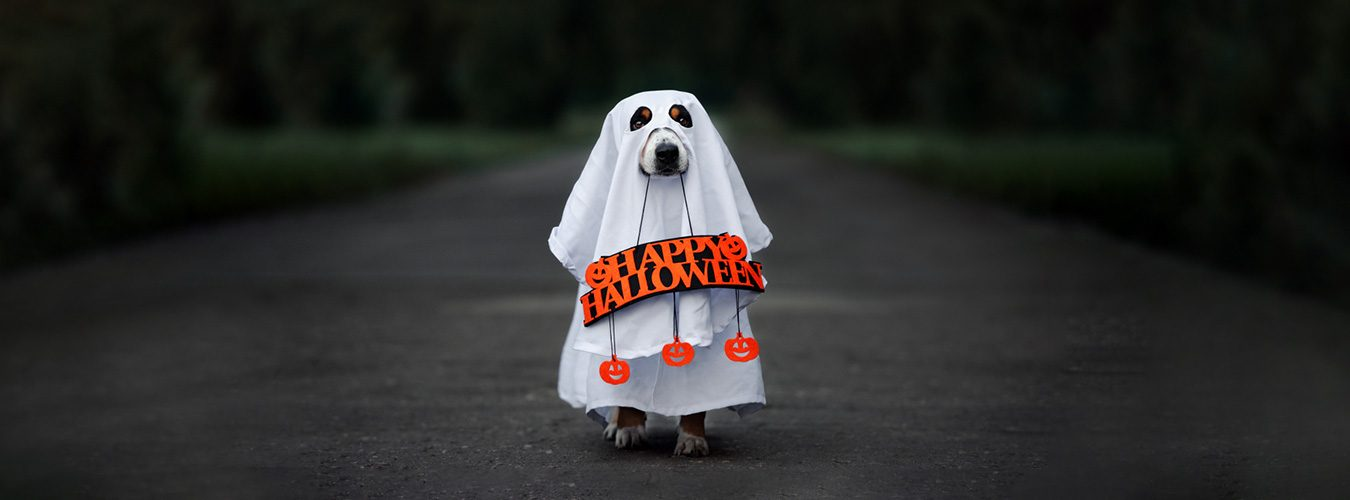 7-halloween-marketing-campaigns