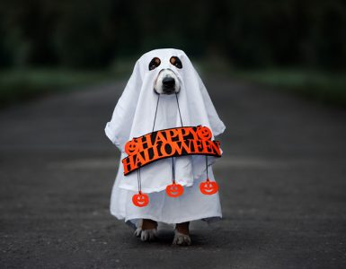 7-halloween-marketing-campaigns